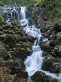 Cascade in Bos Stock Fotografie
