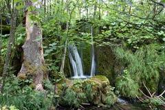 Cascade in bos (Meren Plitvice) Royalty-vrije Stock Afbeeldingen