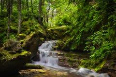 Cascade Cascade de montagne dans la forêt avec des fougères Images libres de droits