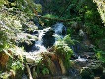 Cascade Charlemagne in de de Vogezen-bergen La Frankrijk stock foto's