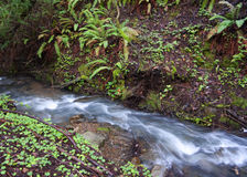 Cascade Creek Royalty Free Stock Images
