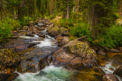 Cascade Creek Grand Tetons Royalty Free Stock Photos