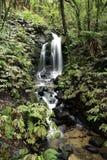 Cascade à écriture ligne par ligne dans la forêt Images stock