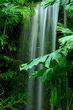 Cascade à écriture ligne par ligne dans la forêt humide Images libres de droits
