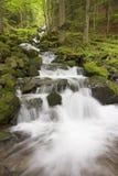 Cascade à écriture ligne par ligne dans une forêt verte Image stock