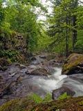 Cascade à écriture ligne par ligne de fleuve de forêt Image libre de droits