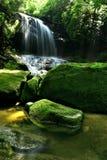 Cascade à écriture ligne par ligne de forêt tropicale Photo stock