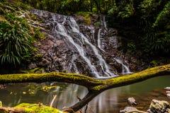 Cascade d'écoulement de l'eau à la forêt photos libres de droits