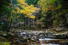 Cascade d'Akame 48 Photographie stock