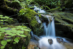 Cascade dans Great Smoky Mountains Photographie stock