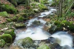 Cascade dans la forêt Photo libre de droits