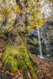 Cascade dans la forêt automnale profonde Photos libres de droits