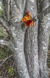 Cascade dans la forêt d'automne Image stock