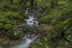 Cascade dans la forêt d'automne Photo stock