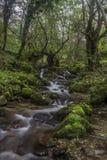 Cascade dans la forêt d'automne Photographie stock
