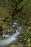 Cascade dans la forêt d'automne Images libres de droits