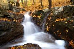 Cascade dans la forêt d'automne Photos stock