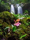 Cascade dans la forêt profonde à la province de Phetchaboon ; Thaïlande Image stock