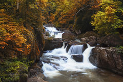 Cascade dans la forêt profonde Images libres de droits