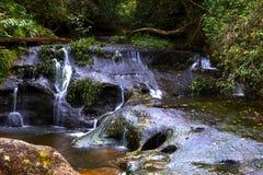 Cascade dans la forêt profonde après la pluie Photo stock