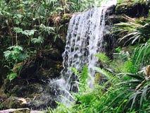 Cascade dans la jungle Image libre de droits