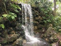 Cascade dans la jungle Photos libres de droits