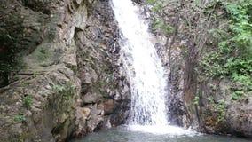 Cascade dans la jungle tropicale clips vidéos