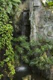 Cascade dans la terre tropicale photos libres de droits