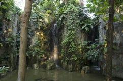 Cascade dans la terre tropicale photographie stock libre de droits