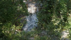 Cascade dans les arbres verts 60fps d'heure d'été de rivière de forêt banque de vidéos