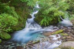 Cascade dans Shennongjia Images stock