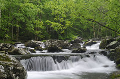Cascade dans Tremont au parc national TN Etats-Unis de Great Smoky Mountains Image stock