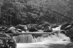 Cascade dans Tremont au parc national TN Etats-Unis de Great Smoky Mountains Photos libres de droits