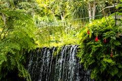 Cascade dans un beau jardin chez Monte au-dessus de Funchal Madère Photographie stock libre de droits