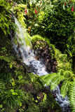 Cascade dans un beau jardin chez Monte au-dessus de Funchal Madère Images stock