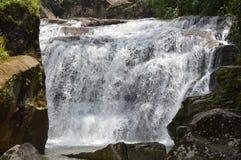 Cascade dans une forêt photographie stock libre de droits