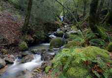Cascade de cascade de canyon d'Uvas photographie stock libre de droits