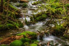Cascade de crique de montagne Images stock