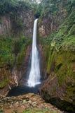 Cascade de Del Toro dans Alajuela, Costa Rica photographie stock libre de droits