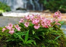Cascade de fleur Photos stock