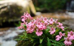 Cascade de fleur Images libres de droits