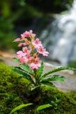 Cascade de fleur Images stock