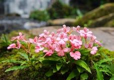 Cascade de fleur Photographie stock libre de droits