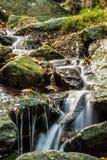 Cascade de forêt Photographie stock
