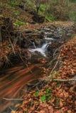 Cascade de forêt de bâti Photographie stock libre de droits