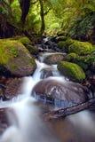 Cascade de forêt humide Images libres de droits