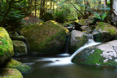 Cascade de forêt humide Photo stock