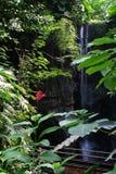 Cascade de forêt tropicale Photos libres de droits