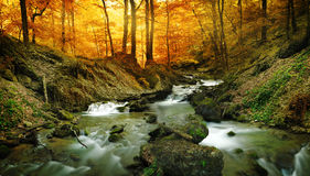 Cascade de forêt Images libres de droits