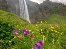 Cascade de l'Islande Images libres de droits